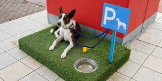 parking-spot-for-dogs-666x333-1